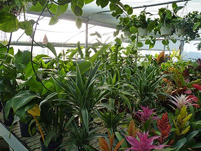 piante da appartamento vivaio del golfo