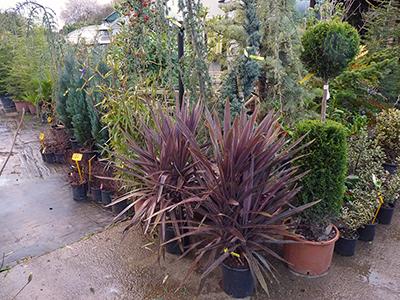 Cespugli ed arbusti da esterno vivaio del golfo - Arbusti sempreverdi da giardino ...